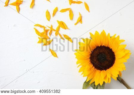 Yellow Sunflower On A White Background. Yellow Sunflower Bouquet, Autumn Concept, Top View, Space Fo
