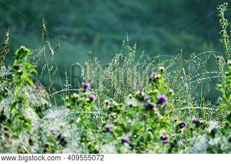 Magnificence Of Living Mountain Meadow. Green Grass Leaves And Blue Flowers With Drops Of Dew Like A