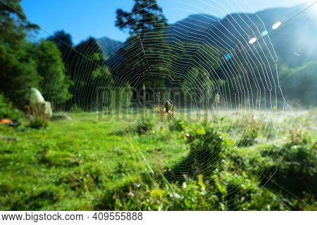 Summer Foggy Morning. Diadem Spider In The Center Of The Dew Web. The Mountain Landscape Is Visible