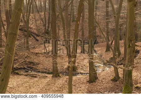 Deep Ravine. Steep Slopes Covered With Deciduous Trees. It Is Early Spring. The Ground Is Covered Wi