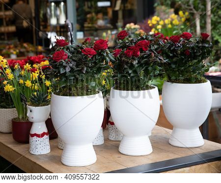 Miniature Red Roses In Pots In A Flower Shop.
