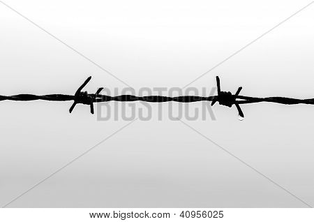 Barbed wire black and white