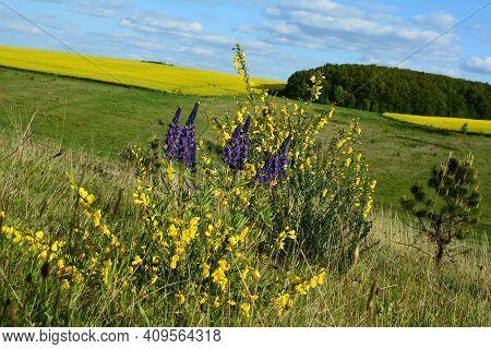 Multi Colored Panoramic Spring Field.yellow Canola Field Panorama.