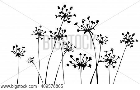 Background With Inflorescences Silhouettes. Grass. Herbs. Spring Or Summer Floral Background.