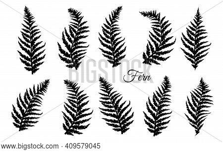 Fern Leaves Set. Fern Design Collection. Vector Illustration