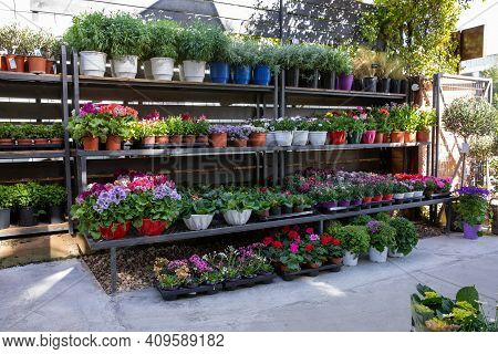 Rack With Variety Of Spring Flowering Plants Such As Primerose, Geranium, Carnation, Persian Butterc