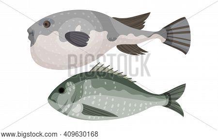 Fish As Gill-bearing Aquatic Animal Used As Seafood Vector Set