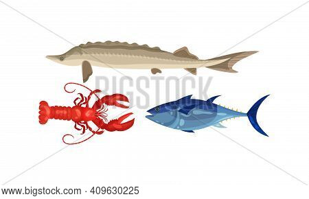 Lobster And Pickerel As Seafood And Marine Delicacy Vector Set