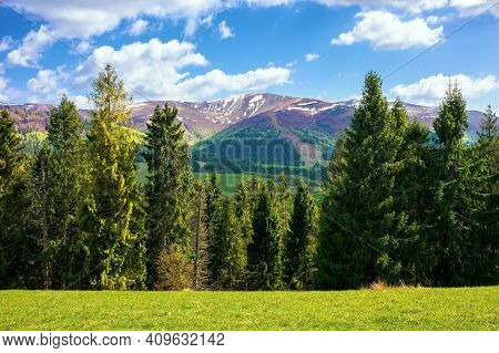 Wonderful Mountain Scenery In Spring. Beautiful View With Alpine Valley In The Background. Spruce Fo
