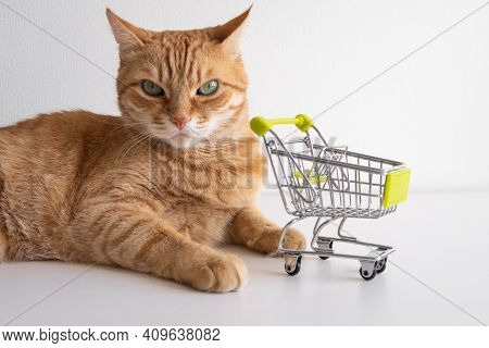 Ginger Cat With Shopping Cart On White Background Looking Seriously. Cute Pet Deciding To Go Buy Gro