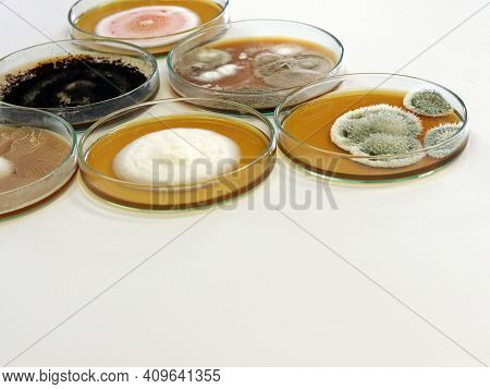 Colonies Of Yeast, Mould And Fungal Testing Fungi (genus Penicillium And Aspergillus) From Air Spore