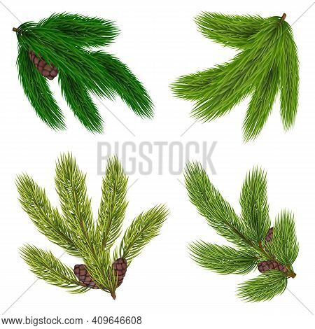 Green Branches Of Coniferous Trees Collection With Cones In Realistic Style Isolated Vector Illustra