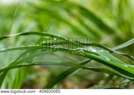 A Drop Of Dew On A Garss Leaf At The Garden Of Home, Leaves, Water Drop On Leaf, Plant Leaves. Tons