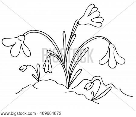 Young Snowdrops In The Spring Grow Out Of The Snow, Vector Black And White Doodle Element, Coloring,