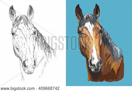 Realistic Head Of Chestnut Horse. Vector Black And White And Colorful Isolated Illustration Of Horse