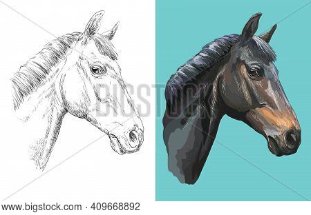 Hand Drawn Head Of Curious Horse. Vector Black And White And Colorful Isolated Illustration Of Horse