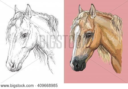 Hand Drawn Head Of Welsh Pony. Vector Black And White And Colorful Isolated Illustration Of Horse. F
