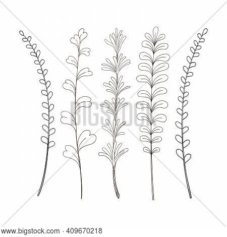 Greenery Vector Sketch Hand Drawn Botanical Clipart. Floral Design. Herbs Cooking Rosemary Thyme Tar