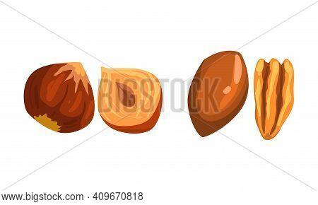 Nut Collection, Macadamia And Hazelnut Nuts, Nutritious Vegetarian Food Ingredients Cartoon Vector I