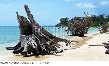 Driftwood On A Tropical Beach With Blue Sky And Turquoise Water In Port Blair, Andaman And Nicobar I