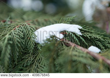 Snow On The Christmas Tree In Winter