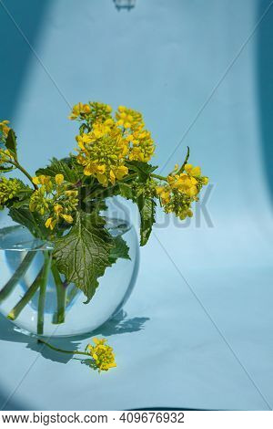 Sinapis Arvensis, Mustard Spring Yellow Blossom Against In A Glass Vase With Water Drops. Bouquet Of