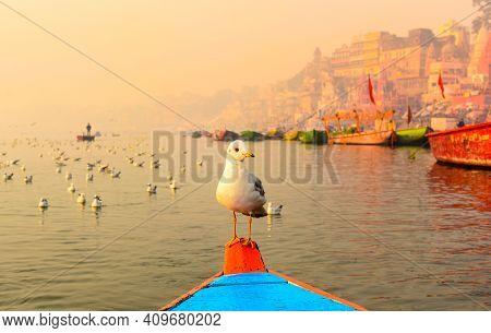 Siberian Bird Sitting On Boat In Varanasi, Holy River Ganga.