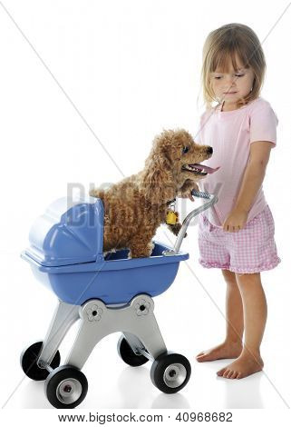 An adorable little girl giving a toy poodle a ride in her doll buggy.  On a white background. poster