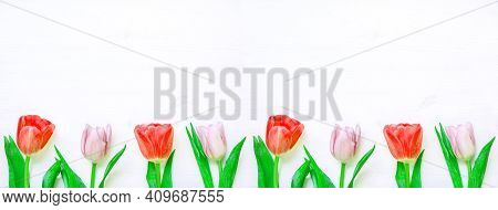 Spring floral background. Tulip flowers on the white wooden background, spring floral border. Spring floral background, tulip flowers,floral design,floral composition,floral frame, floral border