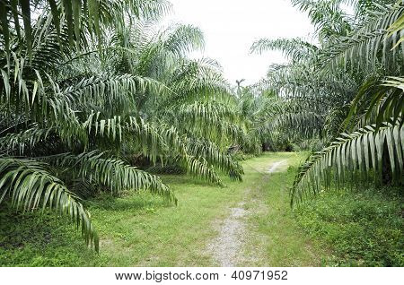 Palm Outdoor Farm Crop Way