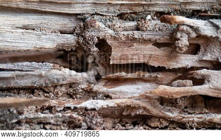 Termite Nest At Old Wood For Background, Nest Termite At Wood Decay, Damaged Wooden Eaten By Termite