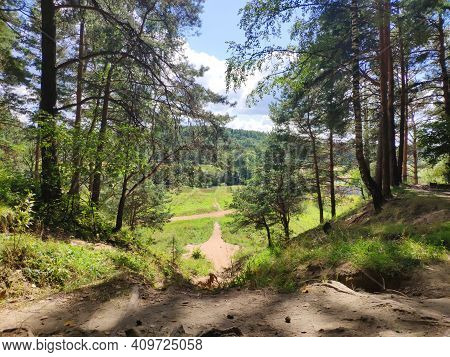 Pine Forest On The High Bank Of The River At The Sunny Day