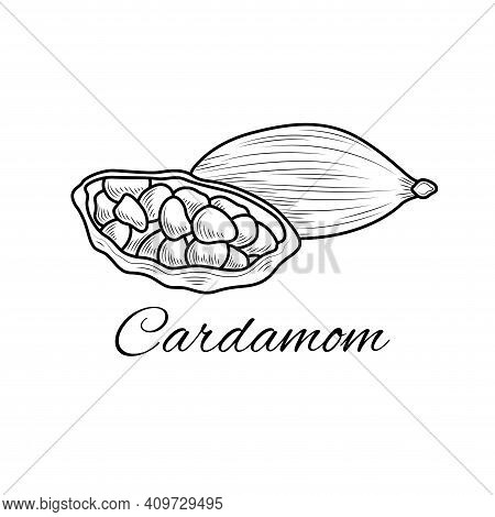Cardamom Sketch.coloring Book Antistress For Children And Adults. Illustration Isolated On White Bac