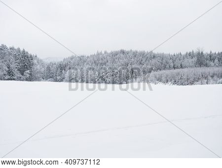 White Snow Covered Field With Frozen Spruce And Broadleaf Trees On Horizon And White Sky Background.