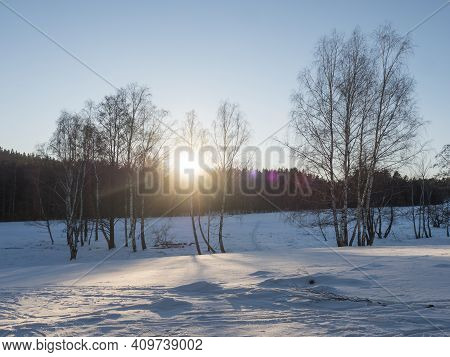 Sunset At Snowy Winter Landscape With Snow-covered Field And Birch Tree And Forest Against Daylight,