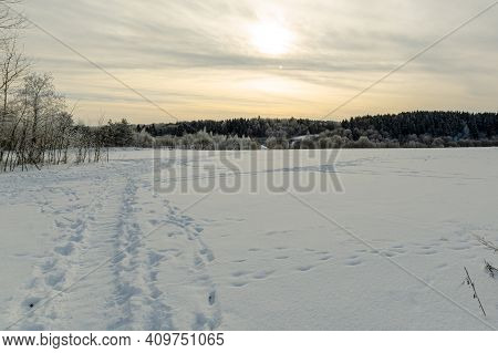 A Path Through A Winter Field, And In The Distance A Forest. Nature In Winter