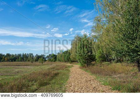 Wooden Observation Tower. Nature Park Beremytske, Chernihiv Region, Beremytske Village, Ukraine. Nat