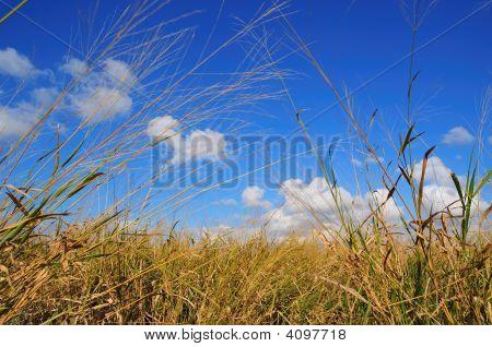 Grassy Field Landscape