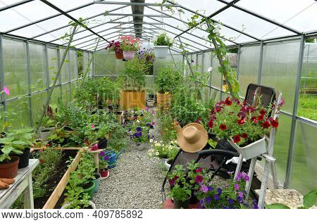 Greenhouse With Plants, Vegetables And Flowers.  Vintage Botanical Background With Plants, Home Hobb