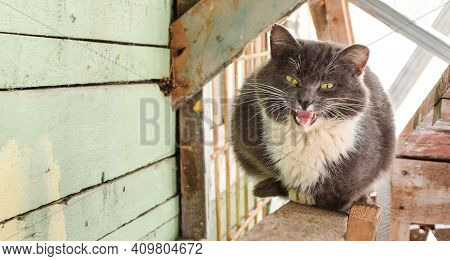 A Hungry Cat Meows Outdoors. Homeless Cat During The Cold Season. Selective Focus.