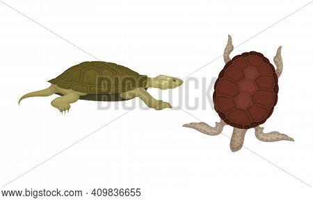 Turtles With Bony Shell As Land-dwelling And Sea-dwelling Specie Vector Set