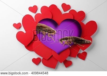 Valentine's Day Promotion Name Roach - Quit Bugging Me. Cockroaches On Purple Background, View Throu