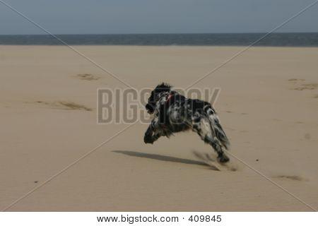 dog running on beach poster