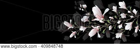 Realistic Magnolia Flower, With Water Drops, A Symbol Of Spring. Decorative Branch Isolated On A Bla
