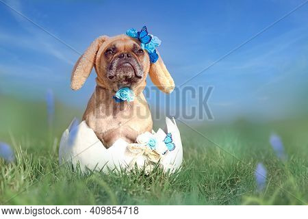 French Bulldog Dressed Up As Easter Bunny Sitting In Giant Egg On Flower Meadow