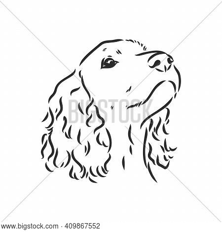 Decorative Portrait Of Standing In Profile English Springer Spaniel, Vector Isolated Illustration In