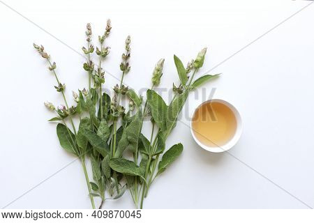 Medicinal Herb Salvia Officinalis Isolated On White Background. Sage Tea And Sage Leaves. An Infusio