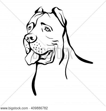 Cane Corso Sketch. Portrait Of A Dog Of The Cane Corso Breed. Hand Drawn Vector Illustration