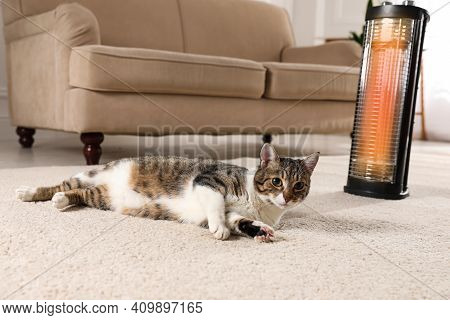 Cute Cat On Floor Near Modern Electric Halogen Heater Indoors