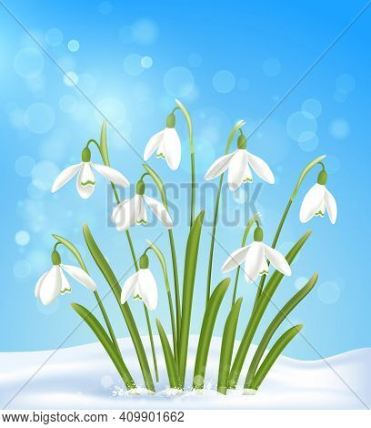 White Snowdrops In The Snow On A Blue Background. Spring Floral Background. Vector Illustration.